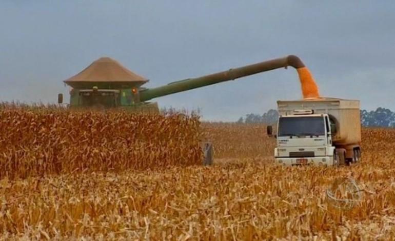 Colheita do milho passa dos 72% em Mato Grosso