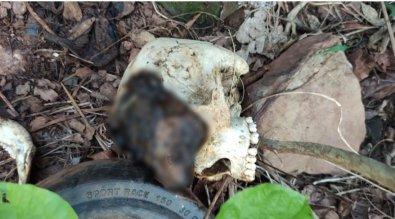 Corpo decapitado é encontrado em propriedade rural